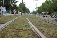 Straßenbahntrasse in der Nieder-Ramstädter Straße mit neuem Sedumbewuchs.